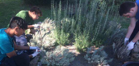 Rey ardid actualidad for Auxiliar jardineria