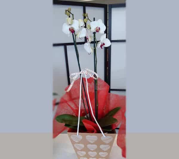 regalar flores en san valentín floristeria emprey 1