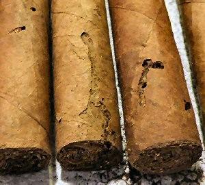 Gorgojo del tabaco